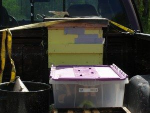 moving beehive