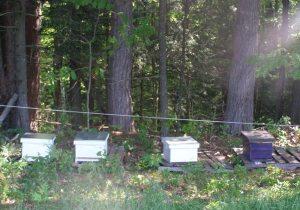 new apiary