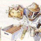 beekeeping clipart