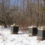 runamuk apiary_dec 2013