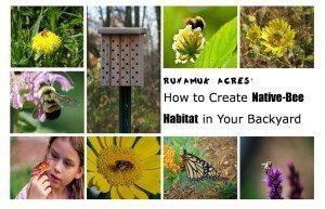 how to create native bee habitat