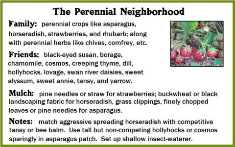 how companion planting works