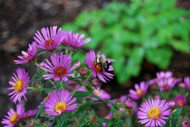 providing native bee habitat on your farm