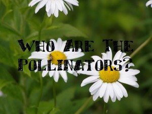 who are the pollinators