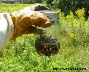 managing beehives in the spring