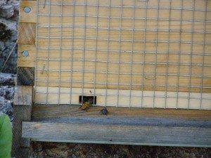 spring beekeeping chores