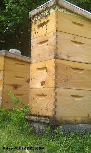 runamuk hive