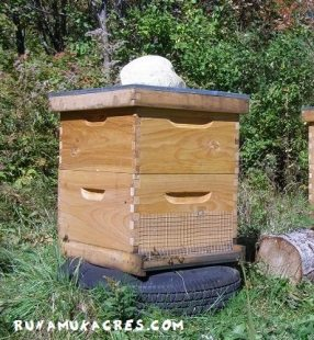 prepping beehives for winter