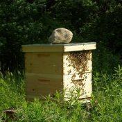 keys to succesful bee stewardship