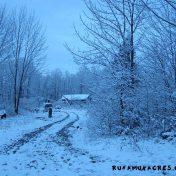 snowy dawn on the farm