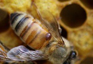 ipm for good bee stewardship