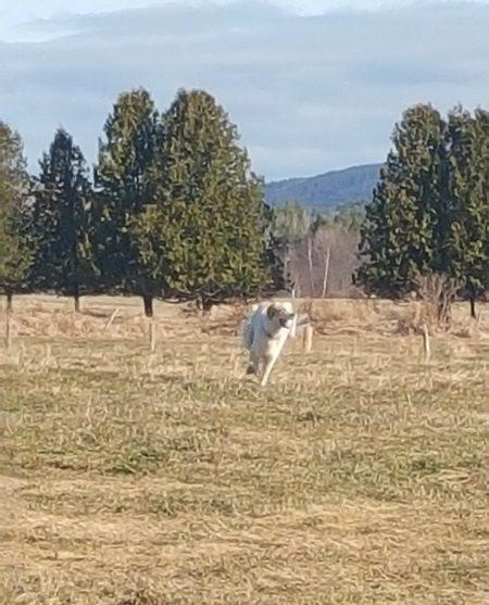 willow on the run