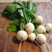 fall turnips