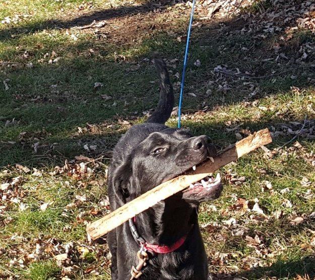 murphy plays fetch