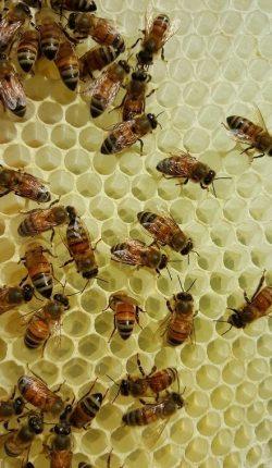 maine beekeeping