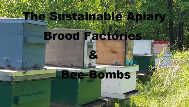 the sustainable apiary