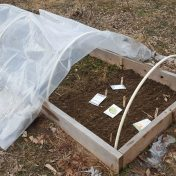 early greens in the mini hoop house