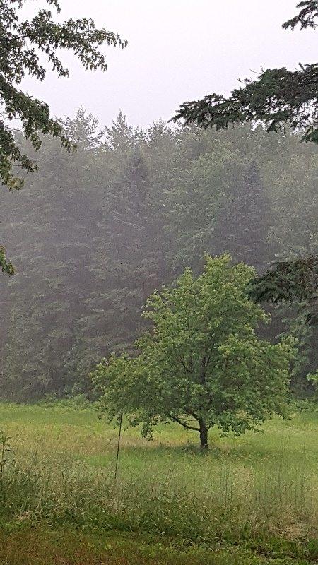 rain at runamuk