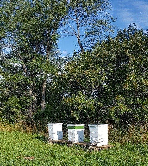 hives at hyl-tun