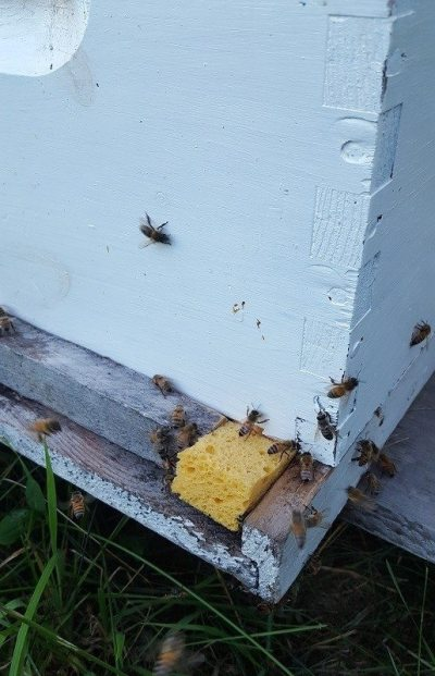 plugging hive entrances