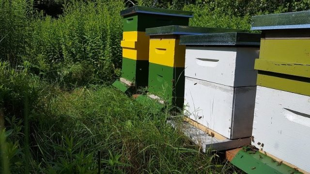 apiary update 2016