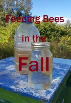 feeding bees in the fall