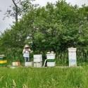 choosing apiary location