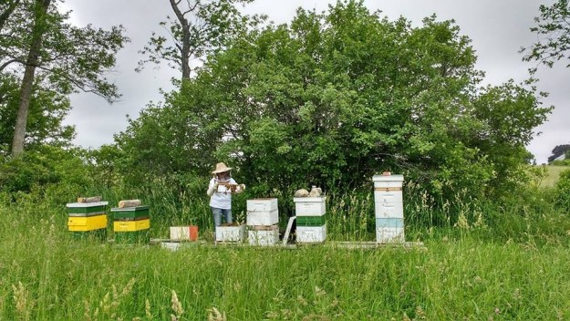 choosing apiary location