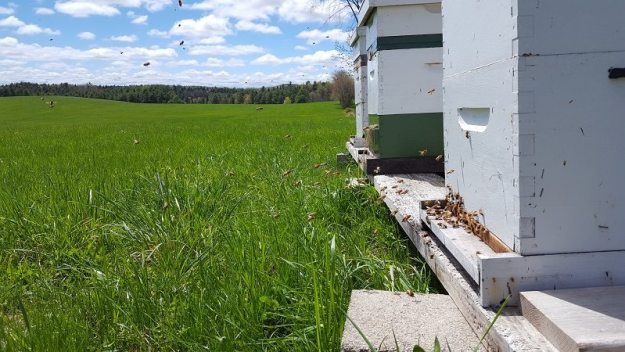 spring hives 2017