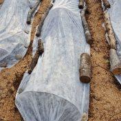 agribon in the runamuk garden