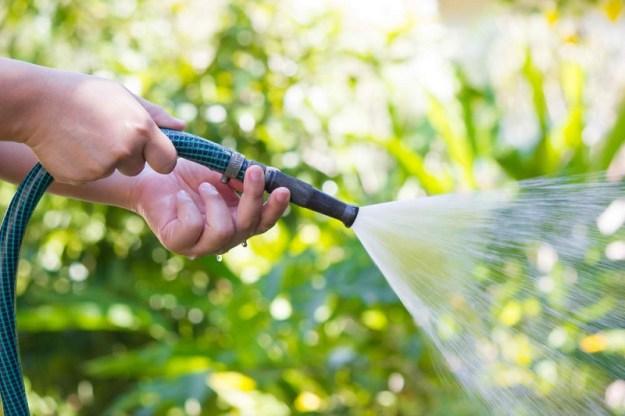 watering