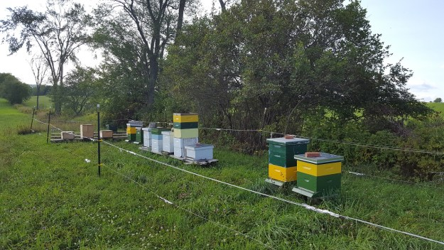 Beehives apiary august 2017