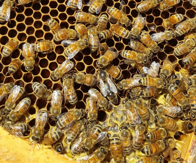 preparing bees for winter