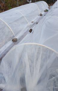 winter growing at runamuk