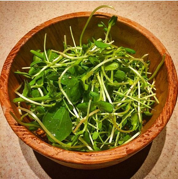 pea shoot salad_winter growing cahllenge