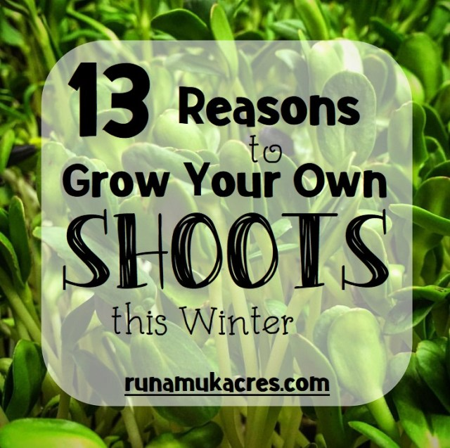 grow your own shoots