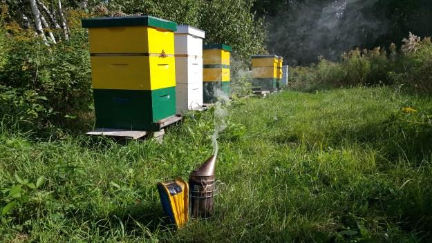 runamuk apiary