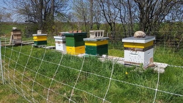 runamuk apiary_may 2018