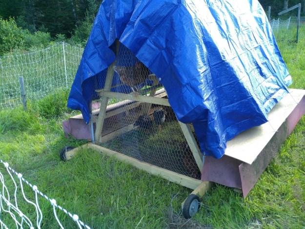 chicken tractor backside