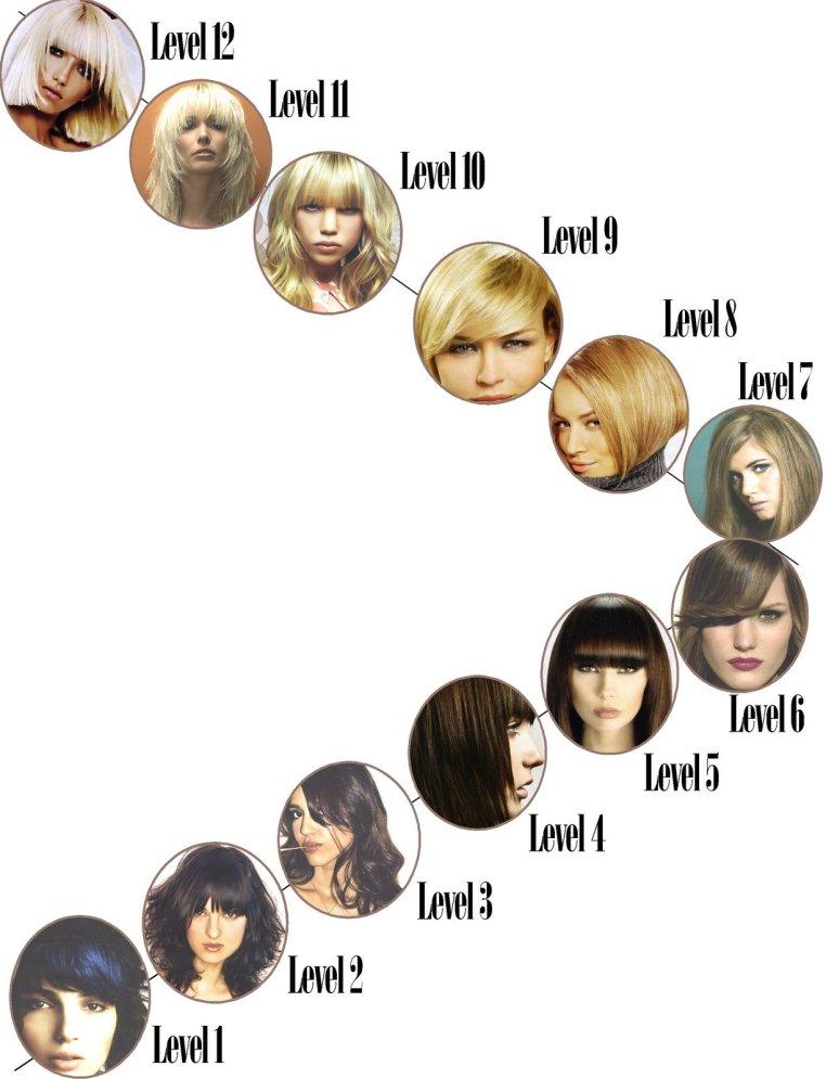 hair level chart