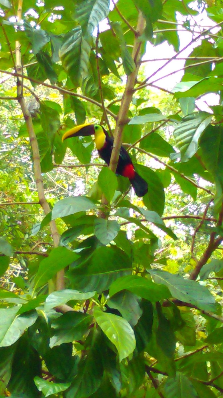 Costa Rica – Runawaynurse
