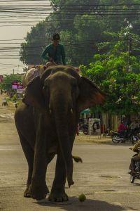 Cambodia 2010-4