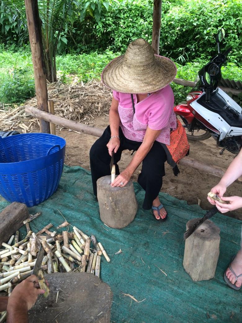 Traveling widow cutting sugar cane fir elephants