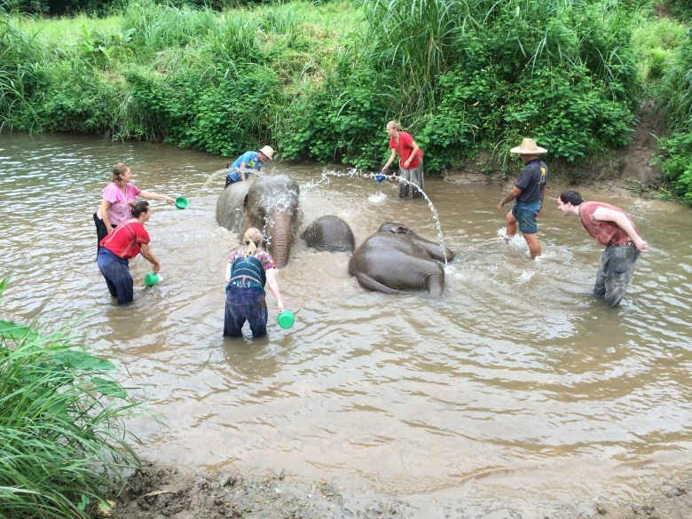 Bathing elephants in Chiangmai