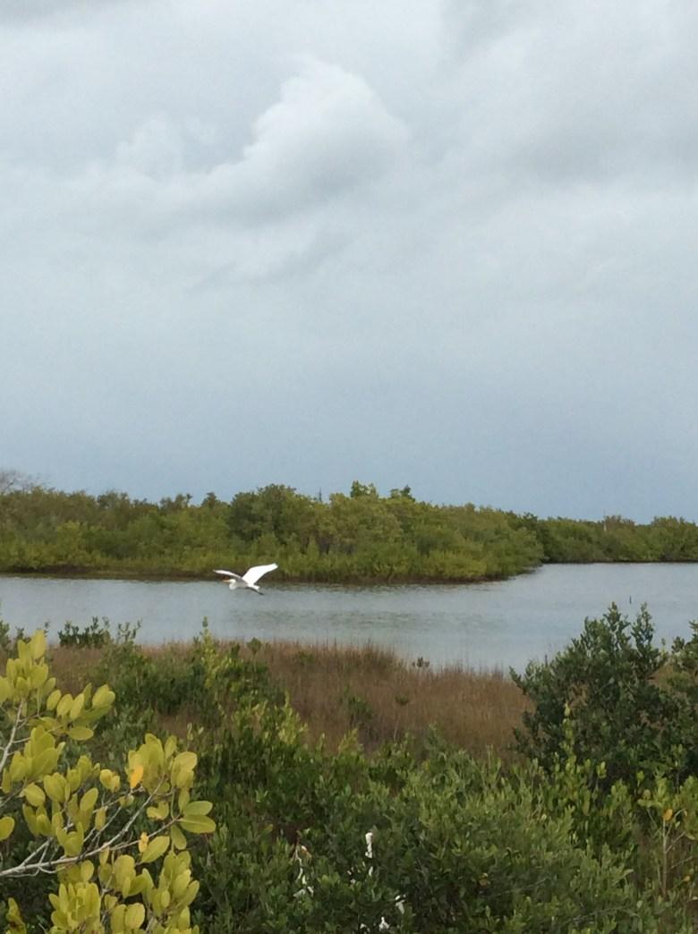 Robinson Nature Preserve Bradenton FL