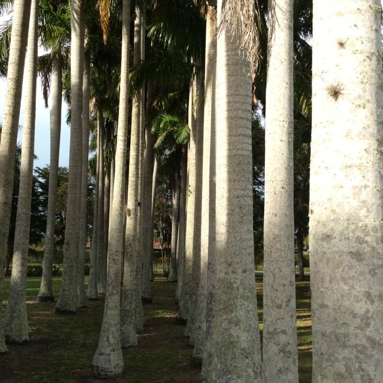 Bradenton Botanical Garden