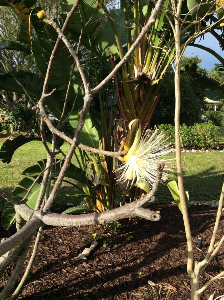 Palma Sol Botanical Garden, Bradenton FL