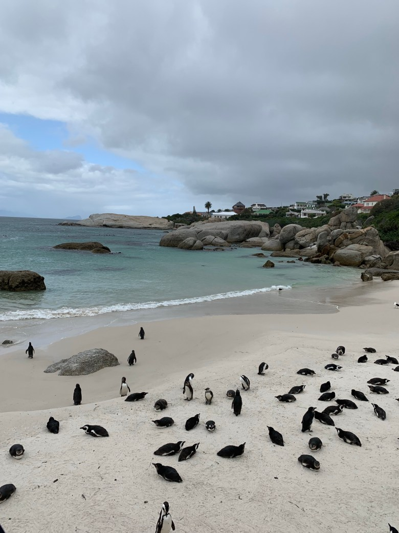 Penguins Boulders beach Capetown SOuth Africa