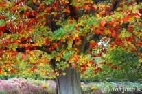 Fall 2012 (19) copy