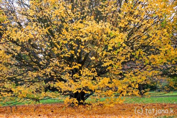 Fall 2012 (3) copy